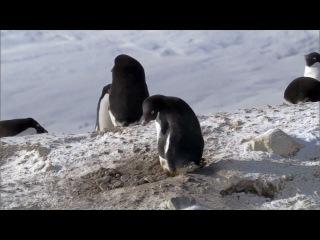 Не честный пингвин